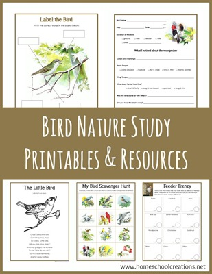 Bird Nature Study Printables
